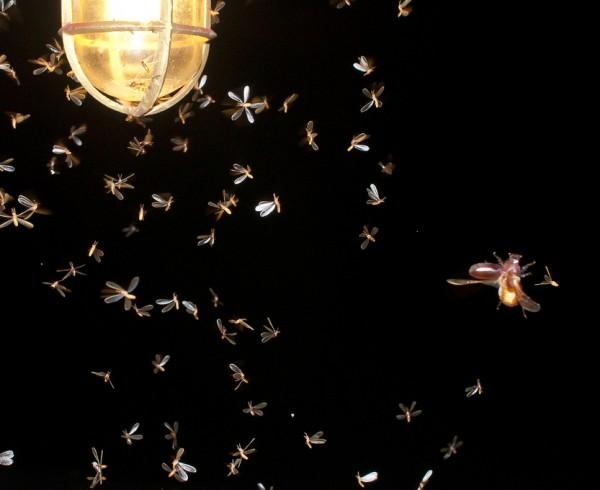 Bugs and LED Lighting